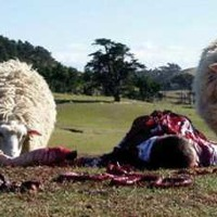 Brebskore  // Fucking mad sheep v.1 Artworks-000050399899-fwzr30-t200x200