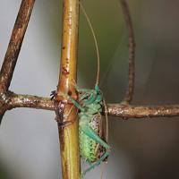 Jim Wilson | God's Chorus of Crickets | crickets audio recording slowed way down